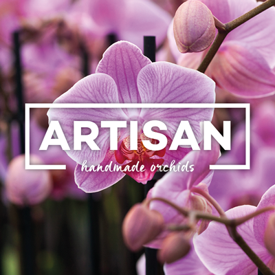 Artisan orchids
